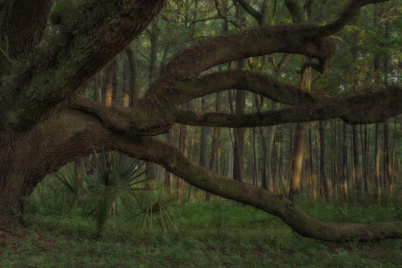 Fotografie Ulla Schaefer aus Leipzig - Arbeiten aus dem Bereich Land - Baum & Bäume - Farbe
