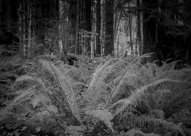 Fotografie Ulla Schaefer aus Leipzig - Arbeiten aus dem Bereich Land - Baum & Bäume - Monochrom