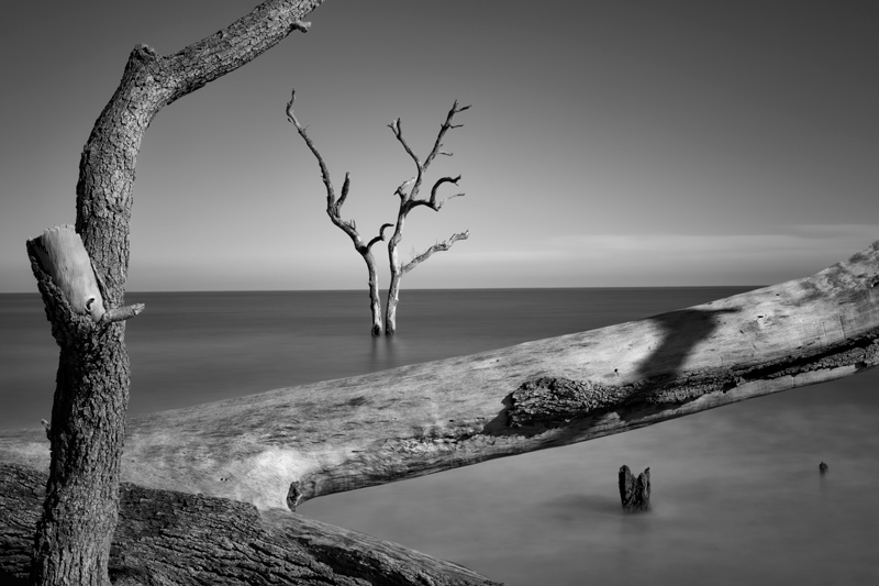 Fotografie Ulla Schaefer aus Leipzig - Arbeiten aus dem Bereich Wasser - Baum & Bäume - Monochrom